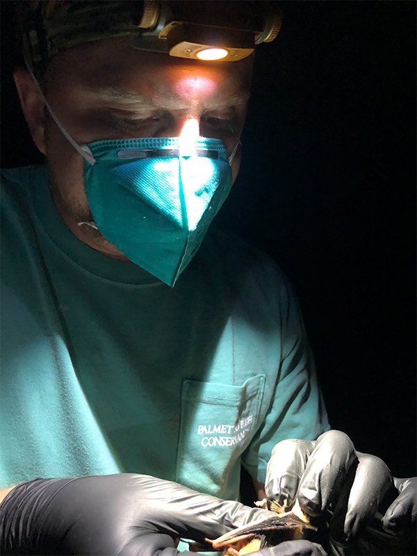 Sam Holst, Conservancy Research Fellow, processing a tri-colored bat.